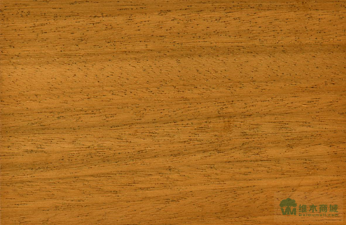 非洲胡桃木图册